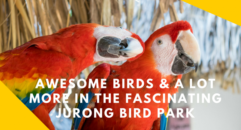 Awesome Birds and a lot more in the Jurong Bird Park