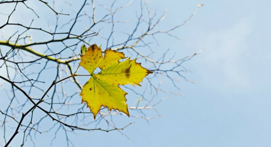 Review of the Last Leaf by O Henry